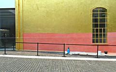 La bonbonne bleue au garde-à-vous (Robert Saucier) Tags: milan milano prada fondationprada doré golden mur wall bleu blue bonbonne pavement fenêtre window vitre glass cristal rose pink img0300