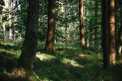 (a└3 X) Tags: natur nature alexfenzl green sonne licht wald österreich neustift austria landscape outdoors color tree bäume wildlife 3x forrest a└3x wow availablelight outside