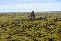 CAMPO DI MUSCHIO (ADRIANO ART FOR PASSION) Tags: islanda iceland islande panorama landscape paesaggio nikon nikond7200 muschio musk 112mm 18200 verde green vacanze adriano