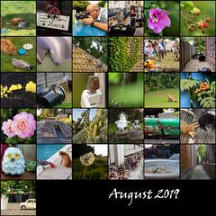 August 2019 (Mandy Willard) Tags: