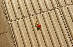 11 septembre - September 11 (p.franche malade - Sick) Tags: couleurdesang feuille automne structures mémoire souvenirs deuil nature pierre abstrait bloodcolor leaf autumn memory memories mourning stone abstract macro sony sonyalpha65 dxo photolab2 bruxelles brussel brussels belgium belgique belgïe europe pfranche pascalfranche schaerbeek schaarbeek