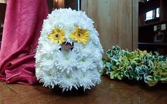 Owl (Mandy Willard) Tags: 365 2508 flowers owl