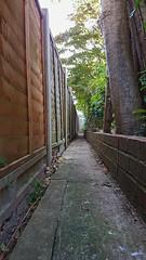 Narrow Path (Mandy Willard) Tags: 365 3008 path fence