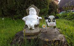 Garden Ornaments (Mandy Willard) Tags: 365 2108 gnome cow