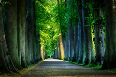 Focussed on the light (Elenovela) Tags: eutin allee alley bäume trees deutschland germany natur nature summer sommer sunshine sunlight sonnenlicht schatten shadows
