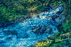 The River (Ann Kunz) Tags: composite switzerland river water abstract surreal woods flowers