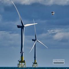 Aberdeen Bay turbines (SavikAlba) Tags: beach aberdeenshire northsea balmedie europeanoffshorewinddeploymentcentre seagull turbine windfarm windturbines