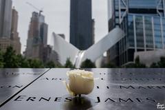 Happy Birthday Ernest James (MrStuy) Tags: newyork 911 worldtradecenter twintowers memorial rose ernestjones birthday name