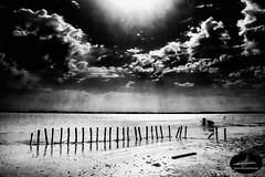 P1080928-Editar (Alfonso Chico) Tags: doñana marismas playa beach blancoynegro blackandwhite cielo sky nubes clouds sol sun monochromia mar sea