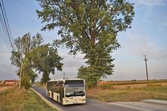 Mercedes-Benz Citaro Euro 3 - 4396 - R423 - 11.09.2019 (VictorSZi) Tags: romania ilfov domnesti bus militari autumn toamna nikon nikond5300 mercedes mercedescitaro mercedescitaroeuro3 mercedesbenzcitaroeuro3 stb transport