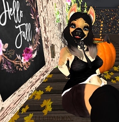 Hello Fall German Shepherd (.LUCIDMOON.) Tags: lucidmoon furry photography mod german shepherd black tan fall pumpkin