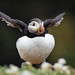 Puffin exercise!