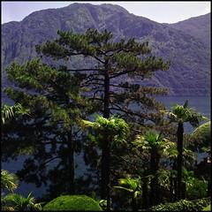Rolleis Lake Como Experience 2019 (610) (Hans Kerensky) Tags: rolleiflex 35c 6x6 tlr fujifilm pro 160ns scanner plustek opticfilm 120 lake como italy 2019 lenno trail villa del balbianello