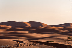 Evening shadows (Irina1010) Tags: sahara desert sunset light shadows sand landscape morocco canon dunes