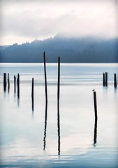 """""""SOMETIMES WE NEED THE FOG TO REMIND OURSELVES THAT ALL OF LIFE IS NOT BLACK AND WHITE."""" ~~JONATHAN LOCKWOOD HUIE (Irene2727) Tags: fog mist poles water reflections trees nature landscape"""