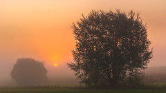 September Morning • Septembermorgen (lidschlag60) Tags: nebel sonnenaufgang baum sonne morgen sommer herbst landschaft orange gelb grün fog sunsunrise tree morning dawn summer autumn landscape yellow germany palatinate pfalz deutschland outside sky