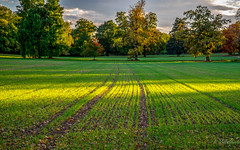 Layers of light (FVillalpando) Tags: light green trees landscape colours nature agriculture ngysa