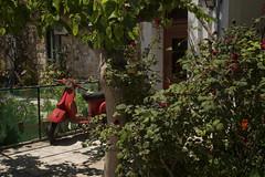 Park yourself here (joannasaviour) Tags: mped moped bike olympus em5 travel street photography scene roadside wheels red leaves leafy garden crete summer chania light