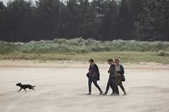 QIFs (alasdair massie) Tags: labrador dog coco beach sand sea norfolk seaside wellsnextthesea england unitedkingdom
