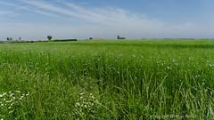Linen (Spotmatix) Tags: 1650mm belgium brabantwallon camera countryside landscape lens nex6 places seasons sony summer sunny villerslaville zoomstd