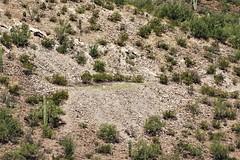 20190911 Henry J Karns Stone Quarry on Powder Keg Ridge (lasertrimman) Tags: 20190911 henry j karns stone quarry powder keg ridge henryjkarns stonequarry powderkegridge
