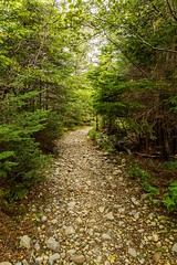 Rocky Road (Karen_Chappell) Tags: road path trail nfld newfoundland torbay eastcoast eastcoasttrail avalonpeninsula atlanticcanada canada canonef24105mmf4lisusm trees brown rocks evergreen nature outdoors hiking hike leaves stones landscape scenery scenic