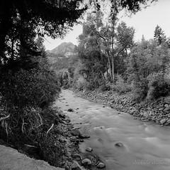 Mountain stream in Ouray, Colorado (altotude studios) Tags: zenzanon bronica sqa ilford delta 100 black white monochrome film medium format nature landscape