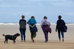 QIFs (alasdair massie) Tags: labrador sand dog black beach vizsla sea norfolk seaside scarpa wellsnextthesea england unitedkingdom