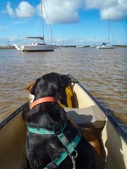 Lookouts (alasdair massie) Tags: labrador creek sea vizsla burnhamdeepdale river canoe norfolk dog black boat estuary coast brancaster seaside pasha scarpa kingslynn england unitedkingdom