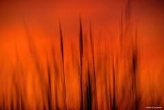 ICM.... (Joe Hengel) Tags: icm intentionalcameramovement lowerslowerdelaware lsd lewes lewesde delaware de darkness red seagrass beachgrass grasses dunegrass silhouette silhouettes watchingthesunset sunset sunlight eveninglight evening eveningskies sky capehenlopenstatepark park capehenlopen statepark