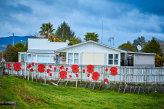 Huntly 8 (ArdieBeaPhotography) Tags: house weatherboard villa sattelitedish fence poppies red anzaccorps veterens remembrance war memorial home