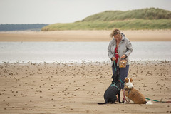 Treat? (alasdair massie) Tags: labrador dog black vizsla sea norfolk seaside pasha sarah scarpa kingslynn england unitedkingdom