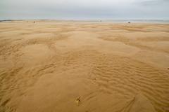 Follow the footprints (alasdair massie) Tags: labrador dog black vizsla sea norfolk seaside scarpa kingslynn england unitedkingdom