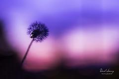 _MG_1194 - e bn (Daniel Jiménez Fotógrafo) Tags: landscape paisaje atardecer getdark sun sunset lateafternoon building edificio cloud nube sky cielo colors purple yellow red pink dark darkness madrid spain españa danifotografia danieljimenezfotowixcomportfolio danieljg