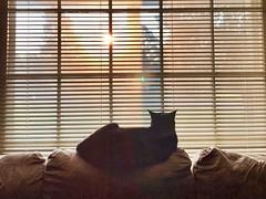 His morning spot 32/365