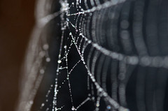 Web with Dew (Explored) (Astral Will) Tags: web dew morning macro spiderweb dof depthoffield bokeh bubbles bokehbubbles explore explored