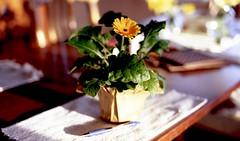 table (bluebird87) Tags: flower table film dx0 c41 epson v600 kodak ektar nikon f100
