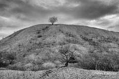 Perspective (peterkaroblis) Tags: schwarzweis blackandwhite infrarot infrared landschaft landscape germany norddeutschland schleswigholstein baum tree wolken clouds