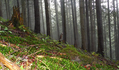 forest (Slávka K) Tags: woods trees fog hill grass atmosphere aftertherain