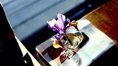 table (bluebird87) Tags: flower table nikon f4s dx0 c41 epson v600 kodak ektar