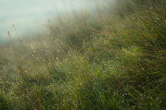 Out early on the fell (tonguedevil) Tags: outdoor outside countryside summer nature hill hillside moorland mist dew morning grass colour light shadows