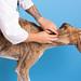 Veterinarian scratching dog