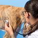 Dog in vet clinic
