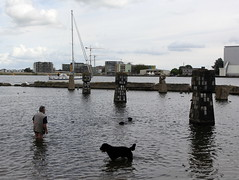 swimming the dogs 1 (andrevanb) Tags: amsterdam westerdoksdijk stenenhoofd dog dogs swimming