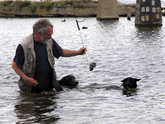 swimming the dogs 6 (andrevanb) Tags: amsterdam westerdoksdijk stenenhoofd dog dogs swimming