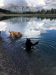 Two pups (Jamie Kerr) Tags: reflection lake water mountains trees clouds mix rescues animals dogs iphone8 iphone adventure exploreab explorealberta explore nature outside outdoors hike grassilaketrail grassilakes canada alberta canmore