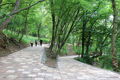 Niška Banja 1 (srkirad) Tags: travel niškabanja serbia srbija park trees path lane walkway forest wood green spa
