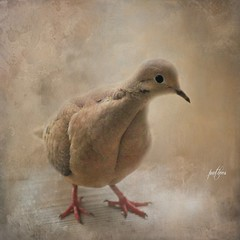 A Little Lonesome Dove...(Explored) (Patlees) Tags: bird mourningdove young textured dt explored