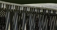 Saint Louie Bones (ioensis) Tags: saintlouie stlouie bones robertstackhouse sculpture sculptor laumeier sculpturepark sunsethills missouri mo jdl ioensis september 2019 15981336067tmf1909071b©johnlangholz2019 johnlangholz2019 15981336067tmf190907