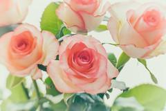 Fünf Rosen (Panasonikon) Tags: panasonikon sonya7 lensbaby sweet35 rose highkey schärfentiefe flower fineart